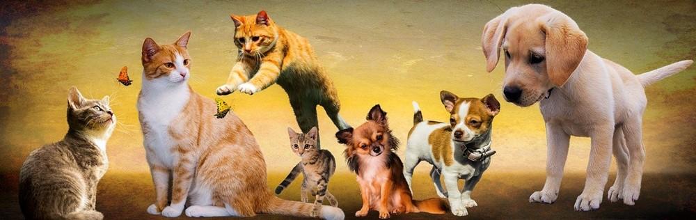 hayvanlar, veteriner