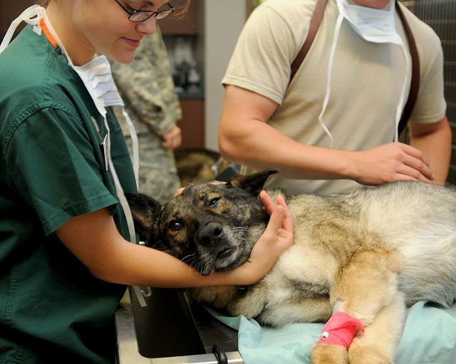 veteriner ne yapar?