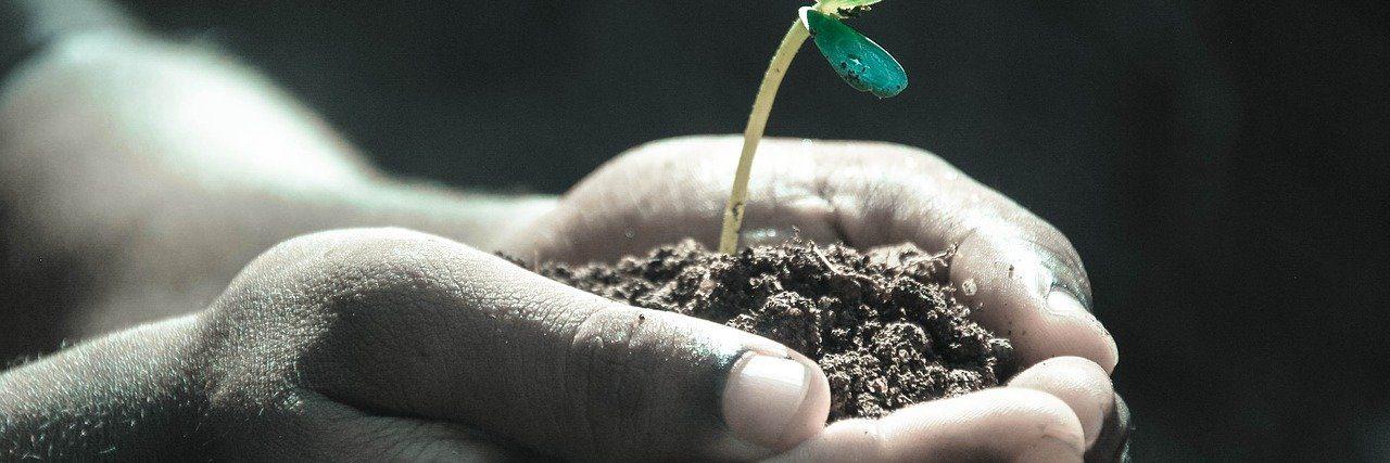 Toprak Bilimi ve Bitki Besleme 2021 Taban Puanları ve Başarı Sıralamaları